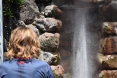 In adorazione del geyser