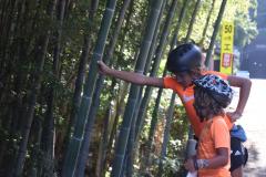 Un bosco di bamboo