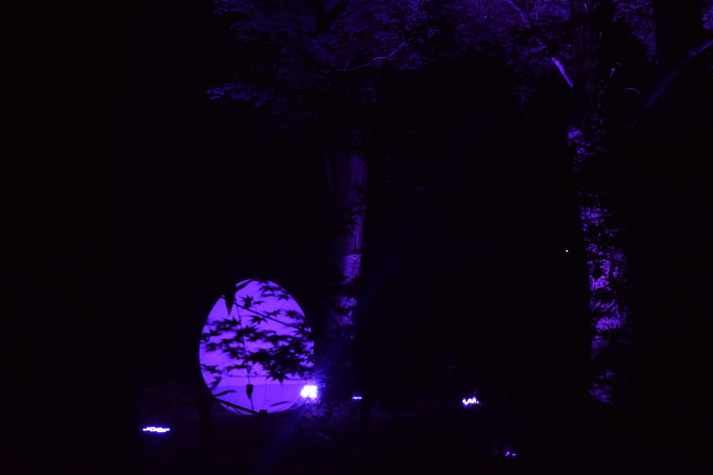 La foresta della verità di notte