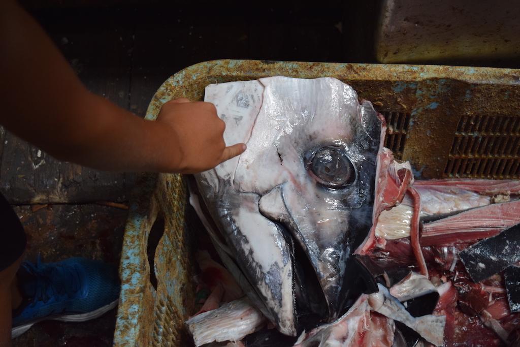 Tsukiji: testa di pesce