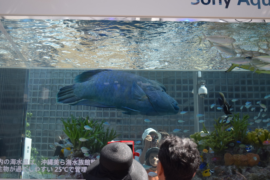 Acquario a Ginza